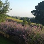 Gorgeous view of the heather