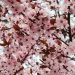fiori dei dintorni