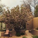 Foto de La Posada de Santa Fe, a Luxury Collection Resort & Spa