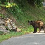 Black bear outside room #230