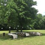 Tables setup in backyard under a cluster of trees.