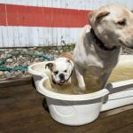 Yappy Hour Pool Party