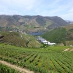 View of the Douro Valley from a winery