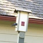 The birdhouse has a nesting pair of blue birds.  Lots of activity.