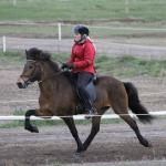 Horse training and horse shows