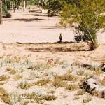 Foto de Pancho Villa State Park