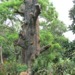 Foto de Hotel Tree of Life