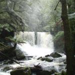Horseshoe Falls, Mt Field NP