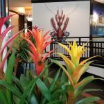 Foto de Hampton Inn & Suites Baton Rouge Downtown