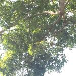 On the property! If you're lucky you will spot an iguana in the trees ��
