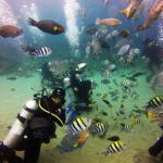Könnyűbúvárkodás és snorkelezés