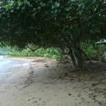 Danny's beach