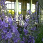 Lavenders at the porch
