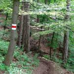 Another view of the steep trail descending through pretty woods from Kahlenberg