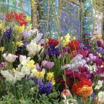 Smith College Spring Flower Show