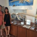 The only complete skeleton of a Hawaiian seal in Hawaii