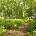 Mass Audubon's North River Wildlife Sanctuary