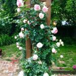 Lovely flowers on trestle in garden