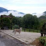Di ritorno dalla passeggiata mattutina (Agriturismo Roccagelli - Meggiano di Vallo di Nera PG)