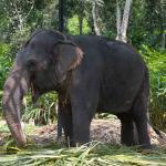 Elephant farm