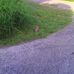 rabbit lake cc