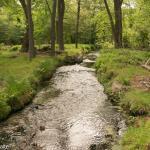 Water Stream