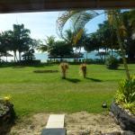 Foto de Sheraton Samoa Aggie Grey's Resort
