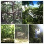 Photo de Big Shoals State Park