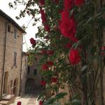 May was a wonderful time to visit- flowers EVERYWHERE in Spello