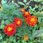 Jardim e as suas flores.