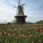 Authentic Dutch Windmill in Windmill Island Gardens