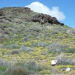 Wild flowers on the side of one of the volcanos