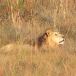 Foto de Wild Ivory Eco lodge