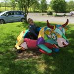 Colourful cow!