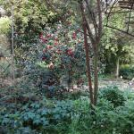 Luxurious flowering garden at Eccleston Square