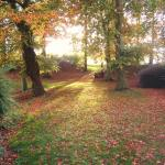 Woodland at Coolanowle Country House & Organic Farm