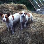 Jack Russell's at Hillview Farm B&B