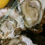 Freshly shucked raw oysters! Exquisite