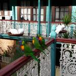 Birds on the balcony