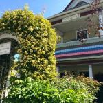 Banks rose showing off at The Painted Lady B & B -