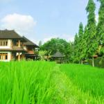 our rice field