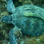 Mergulho com e sem snorkel