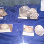 Abalone / Perlemoen shell