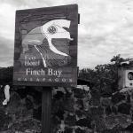 Foto de Finch Bay Eco Hotel