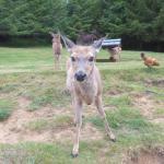 Backyard Wildlife 3