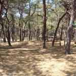 Campsite # 55 in Area 2