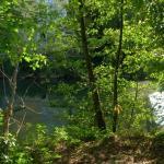 petit sous bois en bordure de rivière