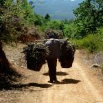 farmer carrying his crops