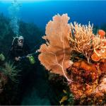 Papayo Divers