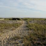 the walk to the beach surrounded by song birds